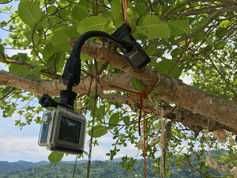 Smatree Adjustable Jaws Flex Clamp Mount on a tree